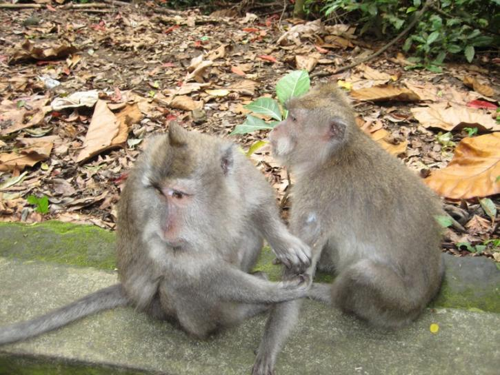 my friends from Bali monkey forrest